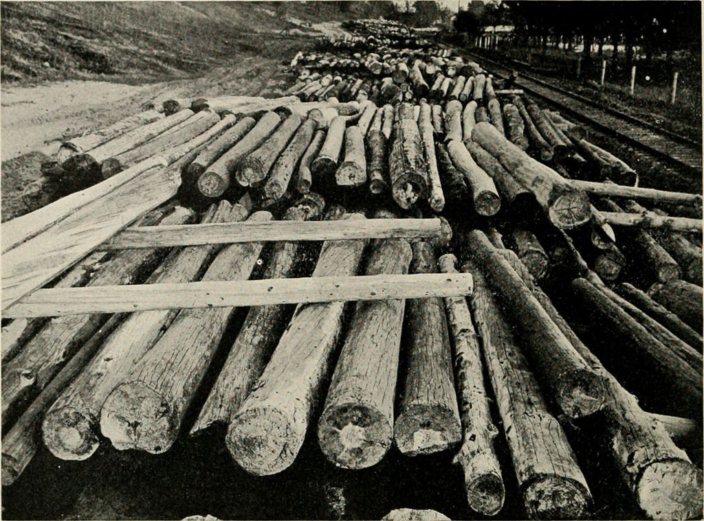 American Forestry, American Forestry Association, circa 1910. Image courtesy of The LuEsther T Mertz Library, the New York Botanical Garden.
